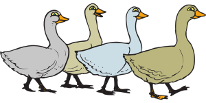 geese-46645_1280