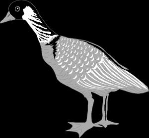 goose-46475_1280