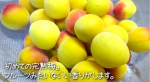 SnapCrab_NoName_2015-6-29_11-13-42_No-00